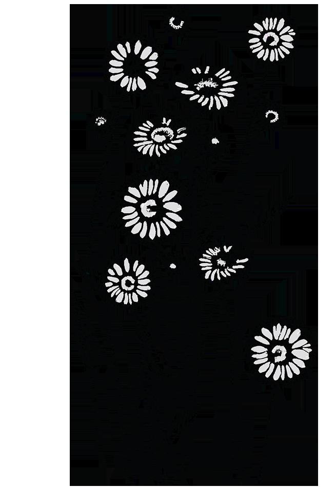 Kokardenblumen